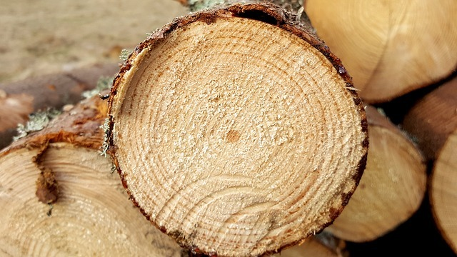 branża drzewna